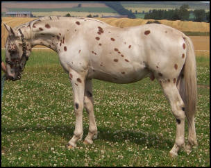 Xcalibur as a yearling